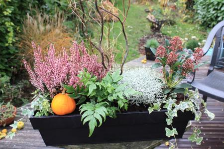 jardinières d'automne : jardisa, coach jardin sur Lille