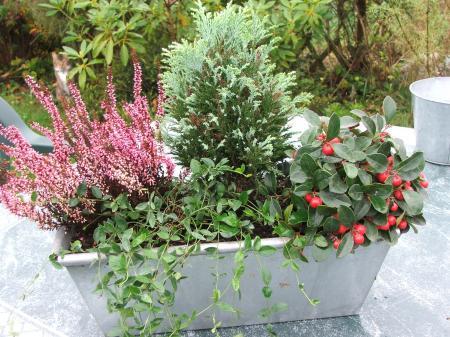 Pin deco de jardin et terrasse forum on pinterest for Jardiniere exterieur hiver